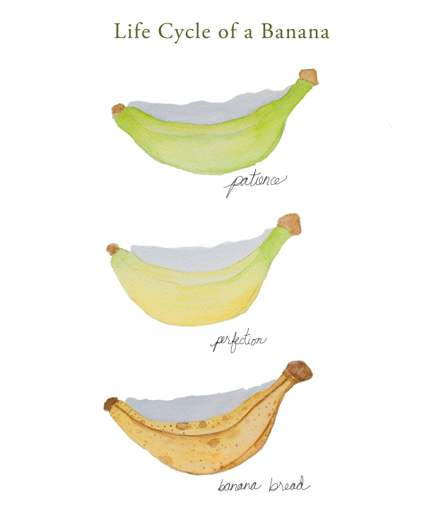 life cycle of a banana